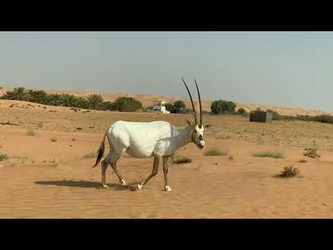 Desert Safari – A morning out in desert