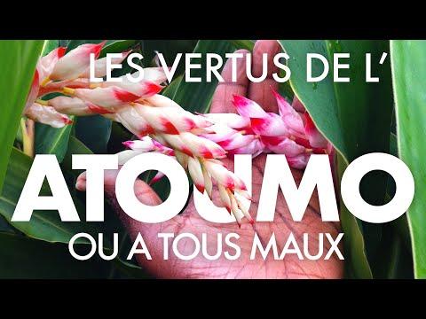 VERTUS DE L'A TOUS MAUX ou ATOUMO - [La Tête et Le Corps] thumbnail
