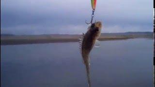 Голодный хищник чуть воблер не утащил.(Ранняя весенняя рыбалка в поисках щуки привела к такому приколу, со мной такое впервые. Моя партнёрка http://joi..., 2016-05-15T05:07:21.000Z)