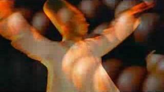 GRUP BUHARA - DÖN SOFİ DÖN (1993)