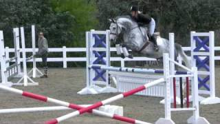Super Hunter/ Jumper/ EQ / Warmblood for sale