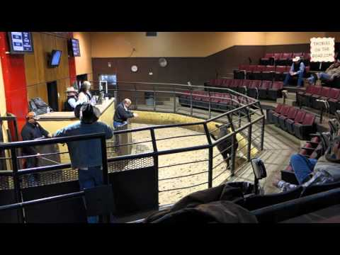 Livestock Auction Oklahoma City
