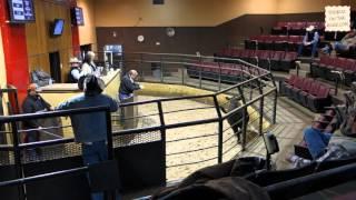 Livestock Auction Oklahoma City