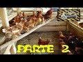 Como hacer gallineros con palets  parte 2 : )
