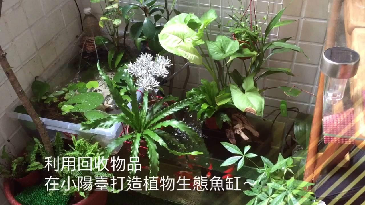 陽臺打造植物生態魚缸 - YouTube