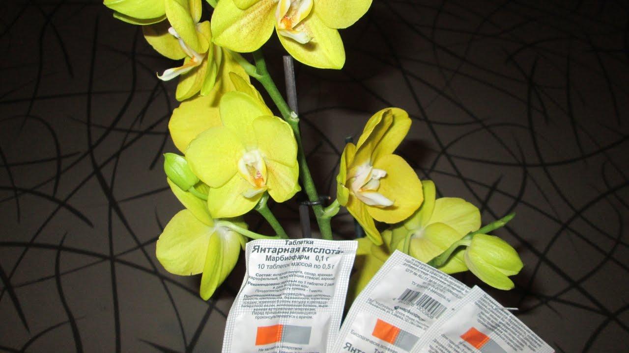 Как правильно использовать янтарную кислоту для подкормки орхидей