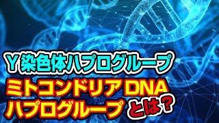 遺伝子から見る日本人のルーツ…Y染色体・ミトコンドリアDNAハプログループとは?