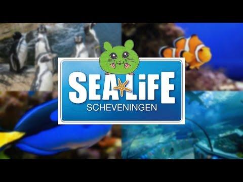 Trip to SeaLife (Netherlands)