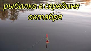 Ловля поплавочной удочкой 16 октября рыбалка на реке