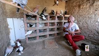 Ravinder Grewal | Tota Maina | Punjabi Doze | Brand New Song 2013