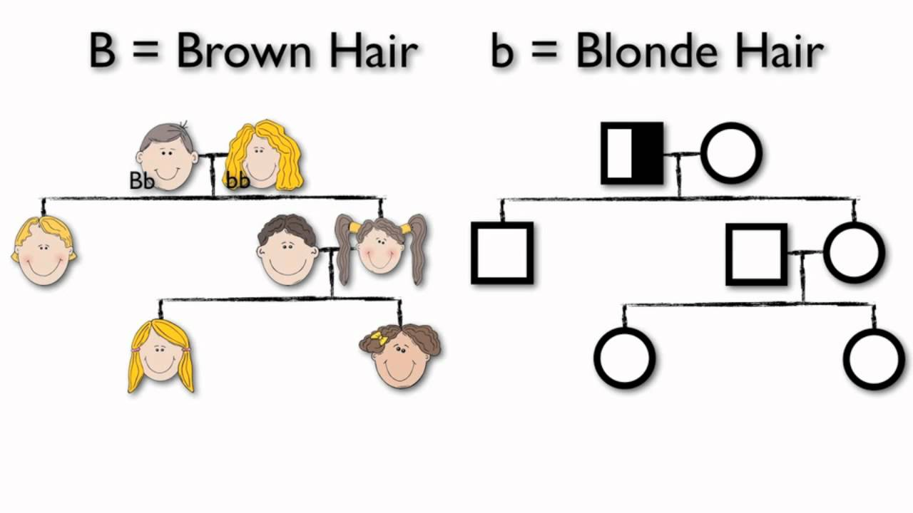 hight resolution of what are pedigree charts
