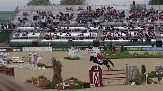 Relevantus (Zorro) -  Eurequine LLC Stallion at the WEG