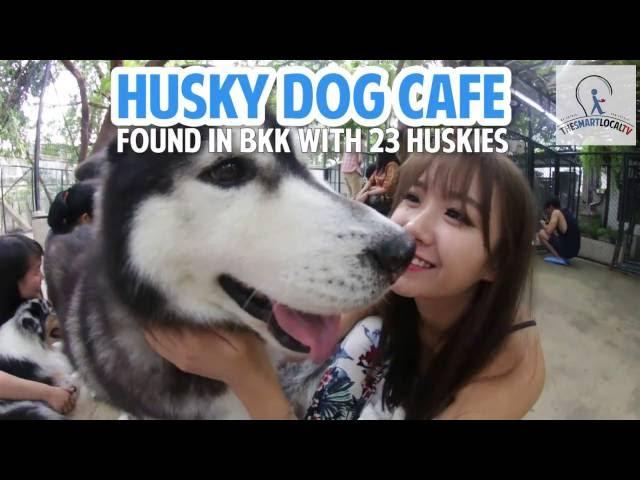 True Love Cafe - A Husky Dog Cafe Discovered In Bangkok!