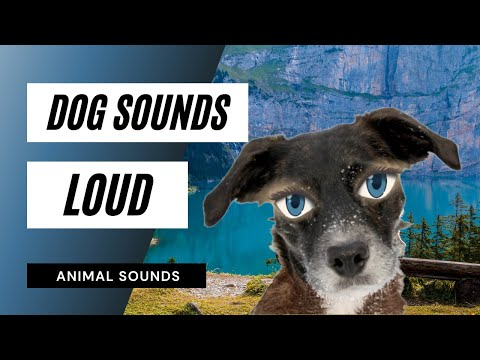 Sound That Will Make Your Dog Stop Barking