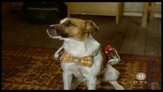 Weißt du was passiert, wenn ein Hund die Tollwut hat?