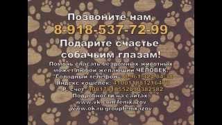 """Хотим домой! (Азовское общество защиты животных """"Феникс"""")"""