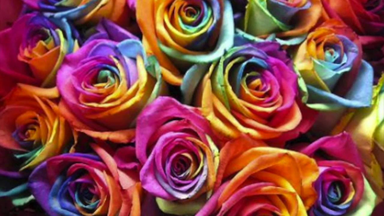 How to make Rainbow Roses: a Step by Step Guide - YouTube