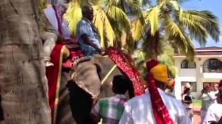 3 день индийской свадьбы (слон, сикхи и музыка)
