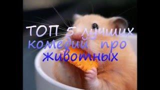 ТОП 5 лучших комедий про животных Часть 1.