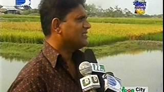 Saline tolerant winter rice cultivation at costal area under CBA project of CNRS 2012 DIGANTA TV New