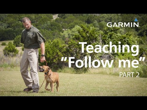"e-collar-training-with-garmin:-teaching-""follow-me""-and-collar-conditioning,-part-2"