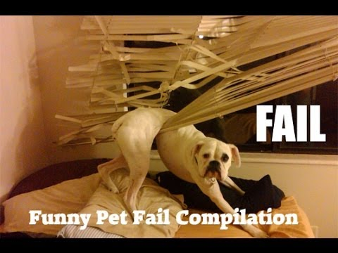 Funny Animal Fails Compilation 2014