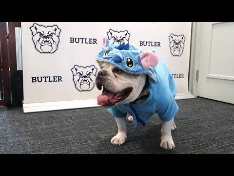 Check out Trip\u0027s Office! Butler Blue Office and BlueMobile Tour