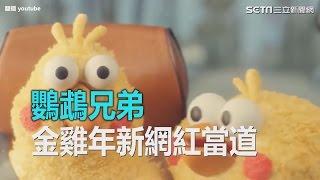金雞報喜大雞大利  日本當紅鸚鵡兄弟紅遍亞洲|三立新聞網SETN.com thumbnail