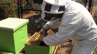 Bee Vlog #65 - August 25, 2012 - Cell size measurements, Housel positioning