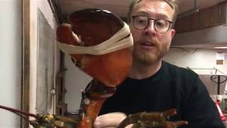 One of Food Busker's most viewed videos: 50 Yr Old LOBSTER The BIGGEST LOBSTER YOU'VE EVER SEEN  |  Nova Scotia Canada