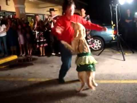 Merengue Dance Golden Retriever