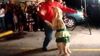 Merengue Dance Golden Retriever