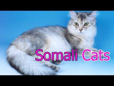 Somali Cats ★ AnyFuns Channel