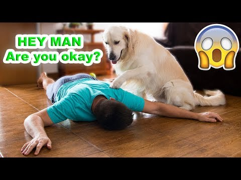 What Does My Dog Do When He Finds Me Fainted [Pretending to Faint]