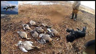"""Фильм от охотника по перу """"Гуси 2018""""(Беларусь),goose hunting Belarus"""