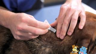 Applying a spot on treatment to your pet  - Reservoir Vet Clinic