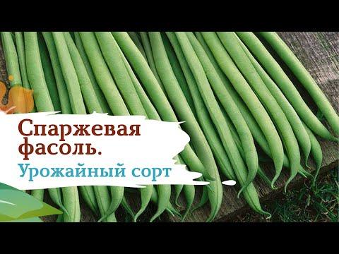 Вопрос: Кустовая спаржевая фасоль Золото Сибири, что за сорт?