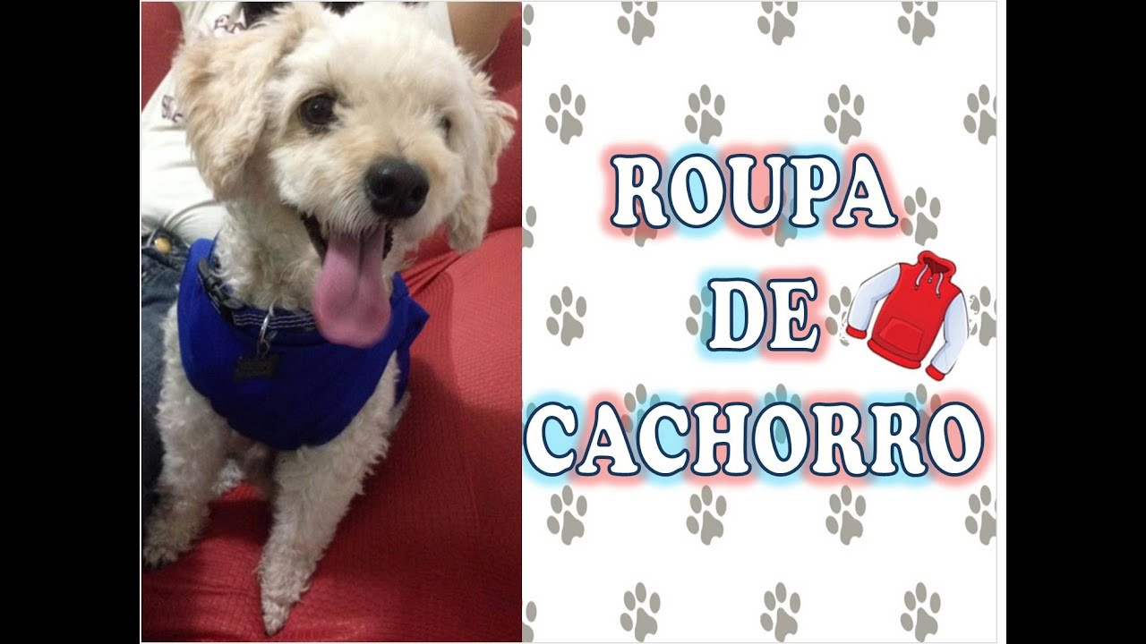 Top DIY - Roupa de cachorro feita de blusa velha! 🐶🐾 - YouTube MN77