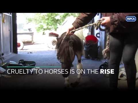 The Equine Crisis- higher cases of animal cruelty on horses than ever before