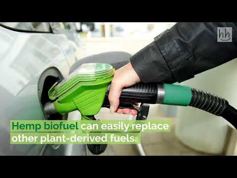 Hemp for Fuel – Using Hemp as a Biofuel || The Magic of THC ||  LealizeNepal2021 || RAbin K.