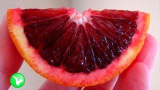Чем отличается красный апельсин от обычного? Красный апельсин – польза и вред.