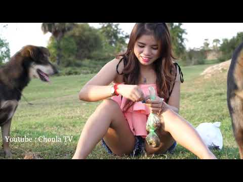 Beautiful girl playing with dog funny  How to train Puppy Smart dog Part 3 HD