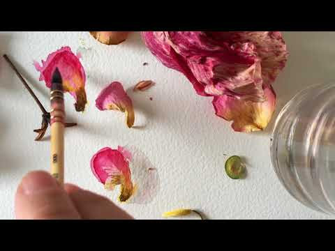 Drawing flowers- WATERCOLOUR PENCILS and water soluble pen. speed painting