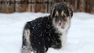 New Mae Mp3 Christmas Upgrade Megamix  YEAR 2014
