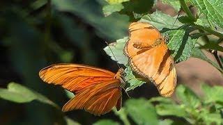 Leben und Sterben der Schmetterlinge.-The butterflies living and dying