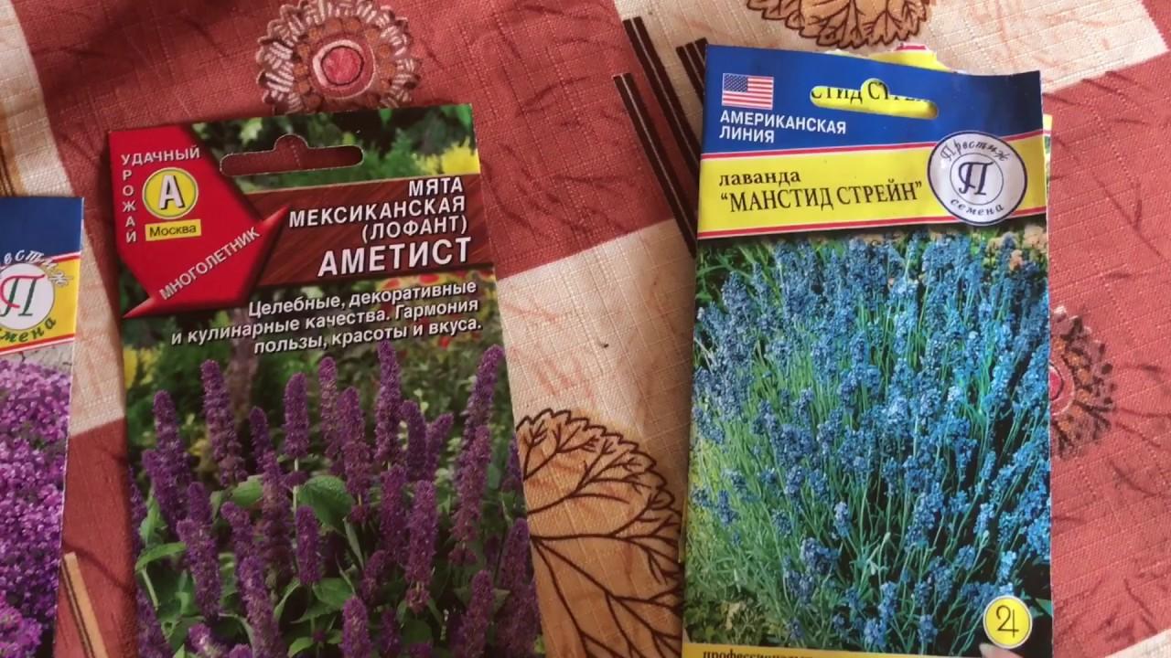 Мята и чабрец ( тимьян ) выращивание из семян
