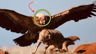 معجزة تشهد بصدق النبي محمد || هذا الطائر في استراليا يشهد بصدق النبي بعد 1400 عام