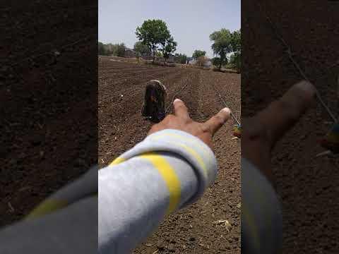 moringa leaves organik farming amrat mitti Balram Jat m.p. B-kisan किसान पाठशाला 9424538222