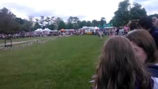 First race of the Burnham Beeches Donkey Derby 25/5/13 - The Stress Chase