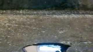 Эколан М   биодеструктивный сорбент нефти на твердых поверхностях(, 2013-06-26T12:39:18.000Z)